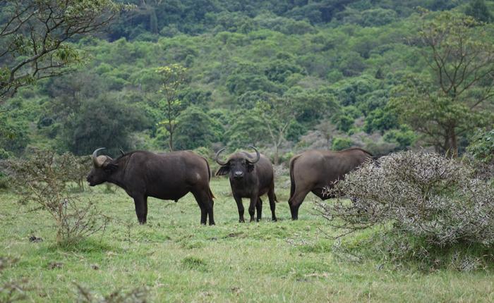 Mont Meru safaris - Kisengo Safaris