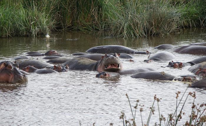 Ngorongoro and Lake Manyara - Kisengo Safaris