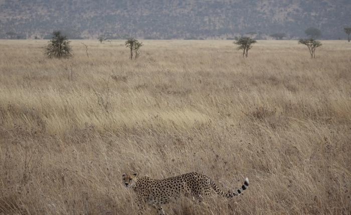 Serengeti - Ngorongoro excursion - Kisengo Safaris