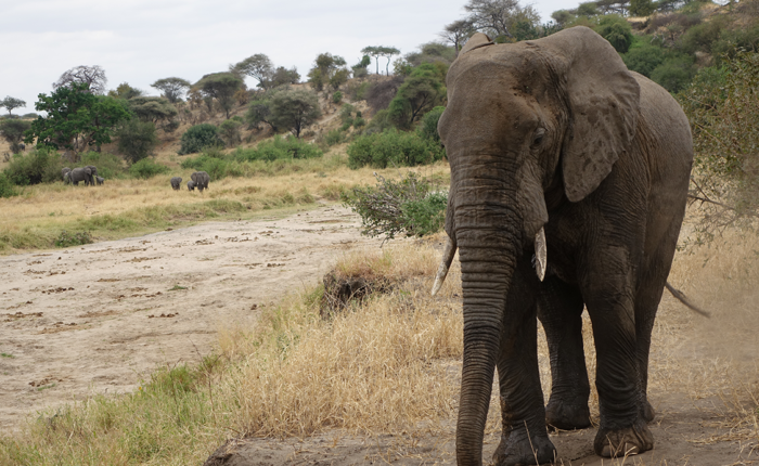 Tarangire safaris trip - Kisengo Safaris