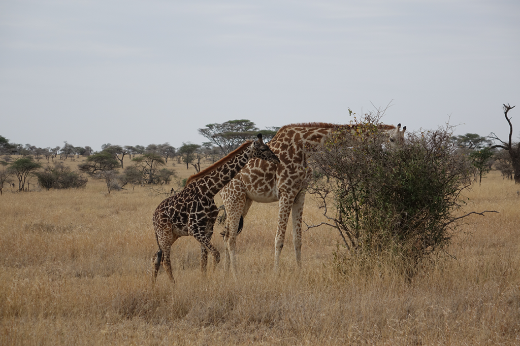 Road trip The essential of Tanzania - Kisengo Safaris