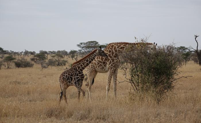 Road trip The essential of Tanzania - Kisengo Safaris