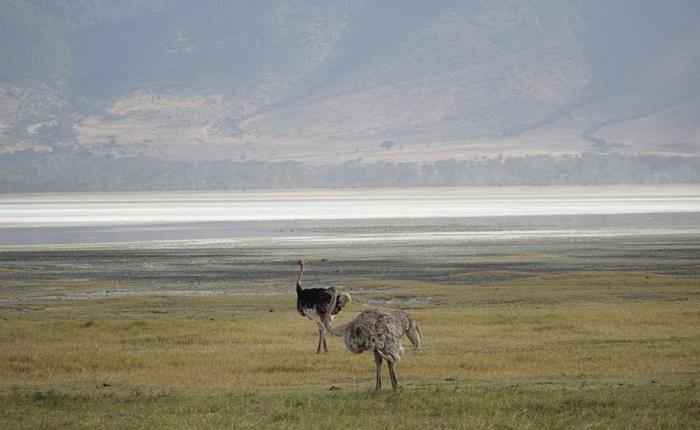 Road trip The kingdom of wild life - Kisengo Safaris